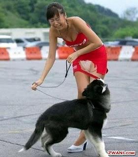 hewan peliharaan anjing