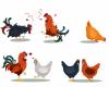 Usaha Peternakan Ayam